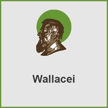 پلاگین Wallacei