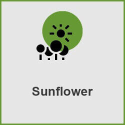 پلاگین Sunflower Solar Analysis