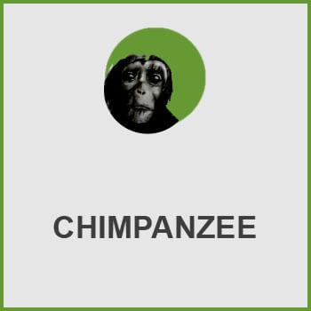 پلاگین Chimpanzee